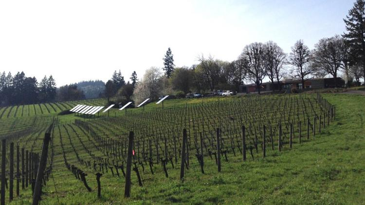 "Operators of Sokol Blosser Vineyard & Winery, in the Dundee Hills, wonder if Oregon's ""new normal"" will actually take."