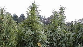 A medical marijuana farm has been proposed for St. Clair County.