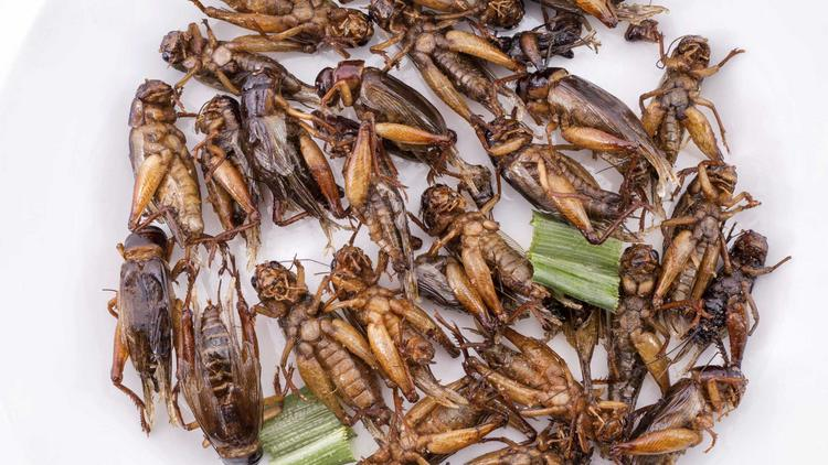 An Ohio insect farm is hoping fried crickets can catch on with diners.