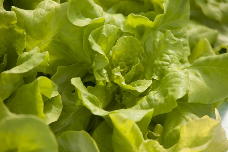 Sweet Water Organics was an aquaponics facility that grew fish and vegetables.