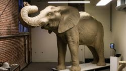 This photo taken in December 2013 shows the clay mold for the sculpture of Jumbo, an elephant that will be installed on Tufts' campus. The sculptor is Steven Wyte.