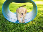 Nonprofit of the Year 2014: Southeastern Guide Dogs