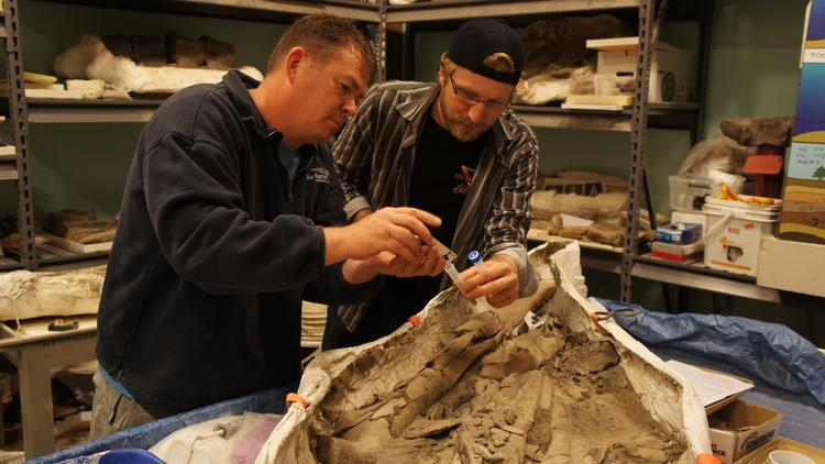 Mmmmm ... fossil beer. Paleo Quest's Jason Osborne, left and Lost Rhino's Jasper Akerboom collect samples from whale bones to look for wild yeast strains.