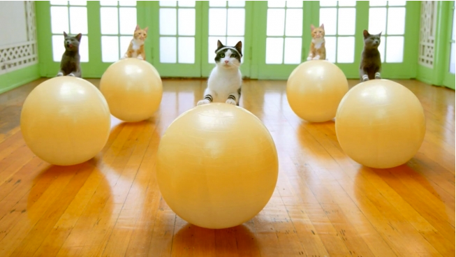 DDB/Chicago heads to the workout room with cats for a new Temptations cat treats video.