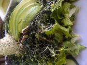 Green Goddess Salad: massaged kale, chopped romaine, sprouts, avocado, cucumber, dulse-and-cilantro vinaigrette, spirulina, herb pate and sprouted seeds.