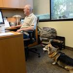 Take Your Dog to Work Day: Spotlight your pup and help raise awareness