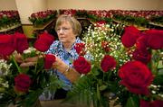 Harriette Miller arranged vases of roses to be set in each guest room at the Galt House.  Miller was part of the In Bloom Again crew readying 1,400 dozen arrangements for the guest rooms. Many more floral displays were being created for use throughout the common areas in the hotel.