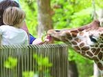 Triad vacationland: N.C. Zoo a jewel whose value is poised to grow