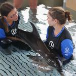Clearwater Marine Aquarium comes to aid of new dolphin