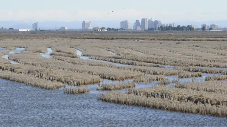 The California Farm Bureau Association wants to couple any new groundwater policies with a simultaneous plan to increase the supply of surface water.