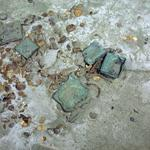 Odyssey recovers silver, gold coins and more at SS Central America shipwreck site