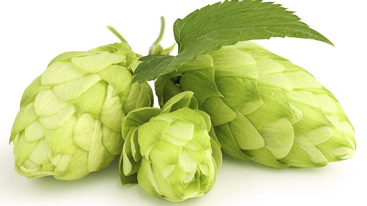 The price of hops has doubled over the last five years to an average of about $7 to $10 a pound.
