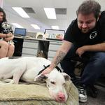 400 Trupanion employees and their 200 pets are moving to Georgetown