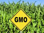 GMO labeling backers concede defeat