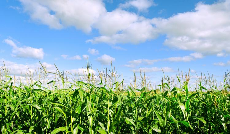 China has turned away 2,000 tons of U.S. corn byproduct, the latest American shipment to be rejected under increased Chinese scrutiny.
