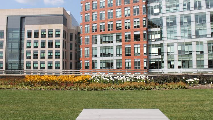 Google's private rooftop garden in Kendall Square