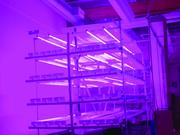 Each of the four layers of grow space is 54 square feet.