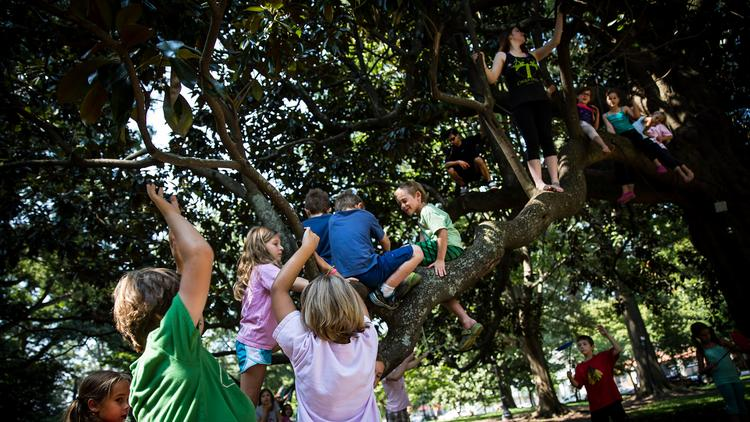 """Students of the Cirque De Vol Studios summer camp program climb on a Magnolia tree in Nash Square on August 6  to practice aerial, juggling and trapeze skills, while at the same time learning about teamwork and communications. John Zaleski, camp instructor, or """"Circus Ring Leader"""" as he has come to be known, stated, """"The best way for our students to learn is through play and outdoor activities."""""""