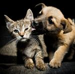 Poi Dogs & Popoki wins Honolulu City and County spay and neuter contract