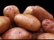 Thill bred the potato to be stored longer than Yukon Gold varieties and to have fewer internal defects.