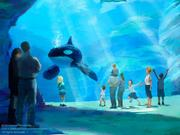 The new killer whale environment will feature an underwater viewing gallery for guests.