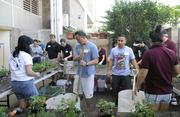 Xerox Hawaii employees and family members volunteered their time to help the Institute for Human Services to re-plant its vertical gardens.