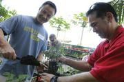 Ian Yee, left, solutions manager at Xerox Hawaii and Grant Higa, area sales manager for Xerox Hawaii, plant chocolate mint at the Institute for Human Services' vertical gardens.