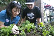 Wendy Howell, left, marketing director for Xerox Hawaii and Christian Lagrange, Institute for Human Services volunteer, plant seedlings for IHS' vertical garden.