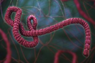 How a tech firm's speeding the search for Ebola cure