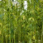 What's next for Kentucky's hemp crop?