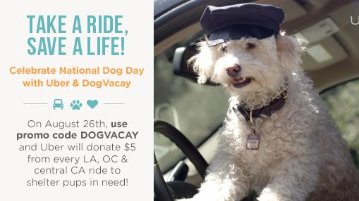 """On Aug. 26, Uber will donate $5 for every Los Angeles-area rider who enters the promo code """"DOGVACAY"""" when hailing a car. The money from these """"Freedom Rides"""" will go to STARTrescue."""