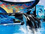 SeaWorld reference disappears, re-appears on FDOE website