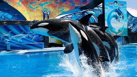 SeaWorld Entertainment Inc. is certain its future still relies on improving the animal and guest experience at its parks, starting with its killer whales.