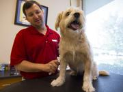 Joe Strasser, co-owner of Lucky's Pet Resort in Greensboro, brushes a guest.