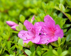 New York will spend tens of millions to lure secret Project Azalea plant