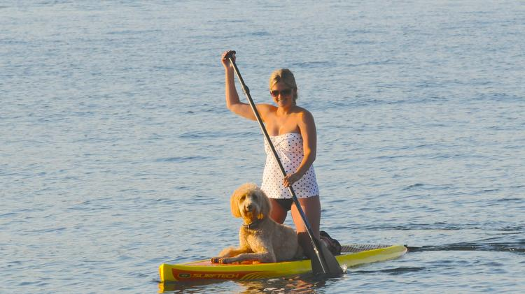 As vacation season slips away with Labor Day around the bend, these two were spotted whiling away time in Lake Washington. Turns out Megan Albertson and her Labradoodle Ernie Hahn are inseparable regulars at paddle boarding. She is a pharmacist at Valley Medical Center and he is, well, a dog, enjoying the dog days of summer.