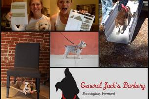Kickstarter projects led by dog lovers