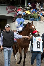 Jockey Kevin Kriggers was aboard Goldencents, a contender partially owned by University of Louisville basketball coach Rick Pitino.