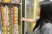 Karen Gabbuat shows off the fresh selection of lei hung in a refrigerated case at Lita's Lei & Flower Shop in Honolulu.