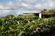 A total of 16 acres of Oprah Winfrey's land on Maui has been designated for farming.