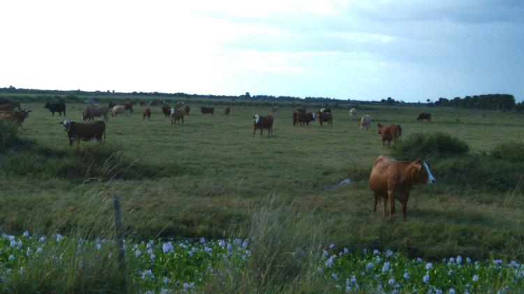 Deseret Ranches is working with Osceola County on a massive 133,000-acre development.