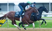 Trainers and horses warm up on the track at Pimlico on Wednesday morning.