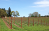 Seattle's Precept Wine buys Oregon Pinot vineyard