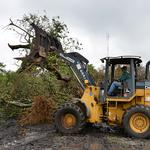 Florida citrus growers: 80% of trees infected by greening