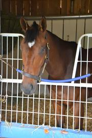 No. 4: Departing trained by Albert M. Stall Jr.; 6-1 odds as of Thursday morning