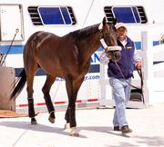 No. 9: ItsMyLuckyDay trained by Edward Plesa Jr.; 10-1 odds as of Thursday morning