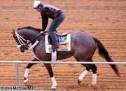 No. 6: Oxbow trained by D. Wayne Lukas; 15-1 odds as of Thursday morning