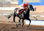 No. 8: Governor Charlie trained by Bob Baffert; 12-1 odds as of Thursday morning