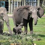 Lowry Park recognized with Bean Award for African elephant program
