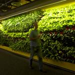 Cool Spaces: Edifecs' living wall is focus for a sustainable office